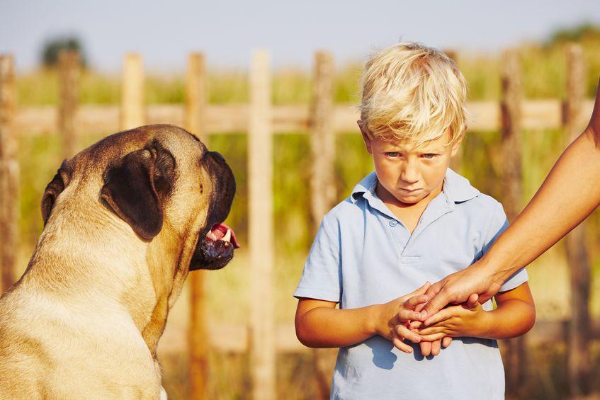 strach ze psu