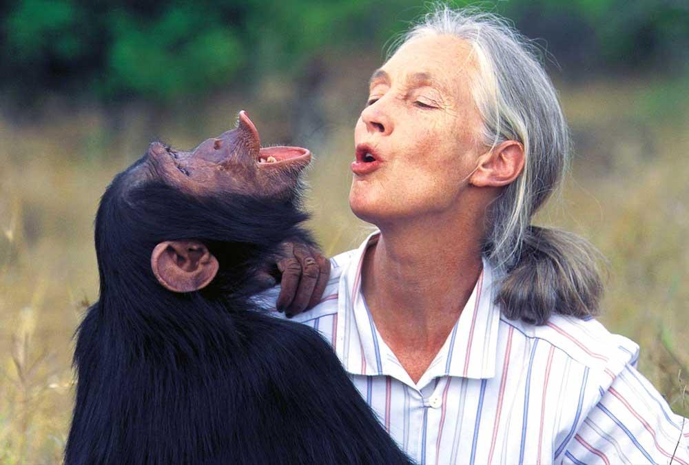 jane goodall simpanz