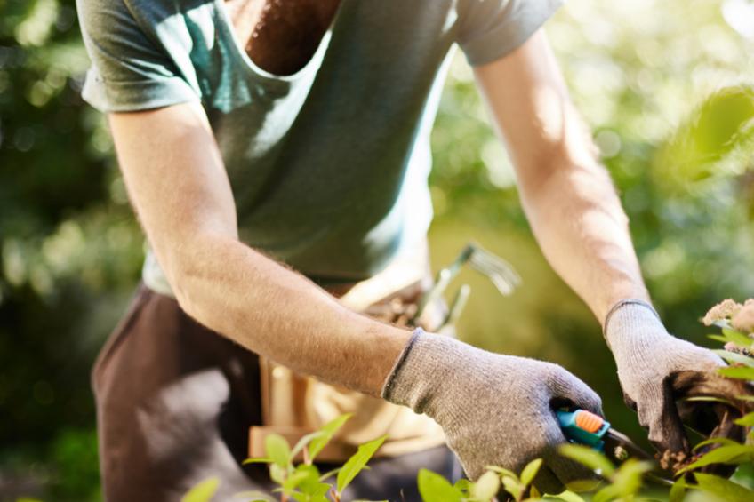 zahradkareni