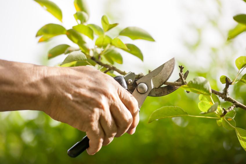 Prorezavani stromu