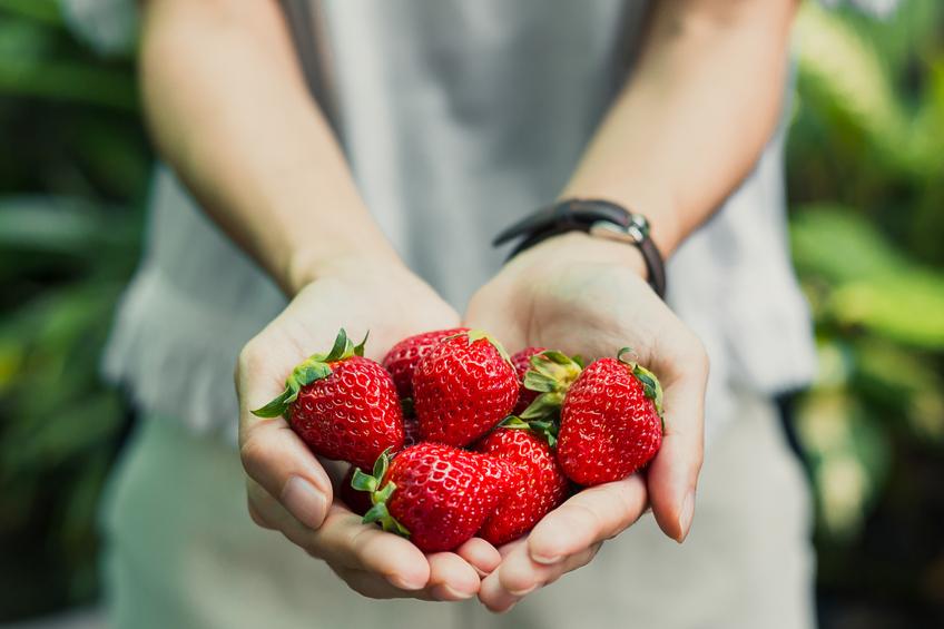 pestovani jahod