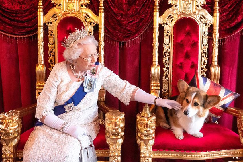 Kralovna Alzbeta pes