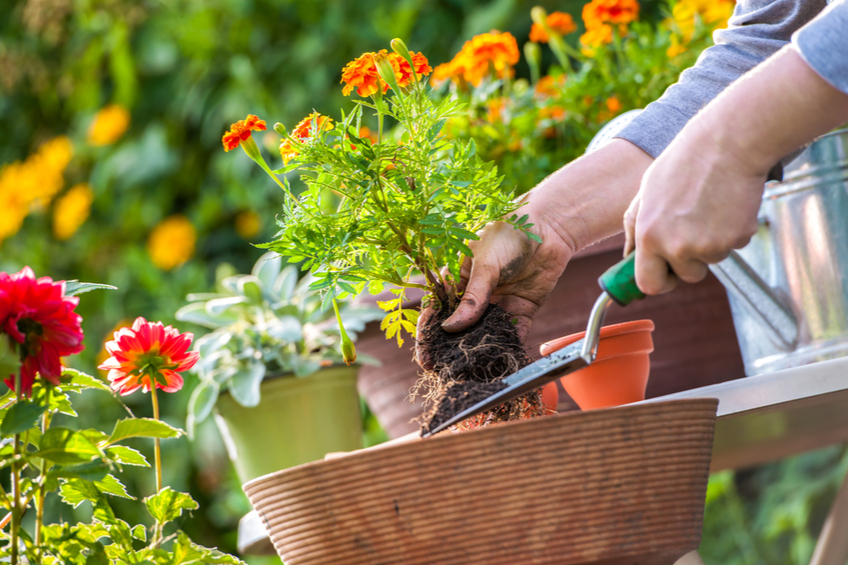 Presazovani zahrada
