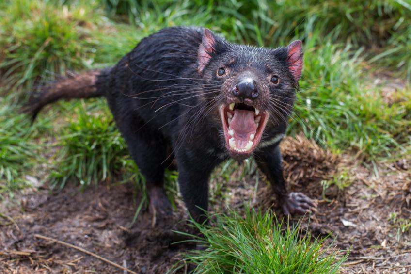 Tasmansky cert