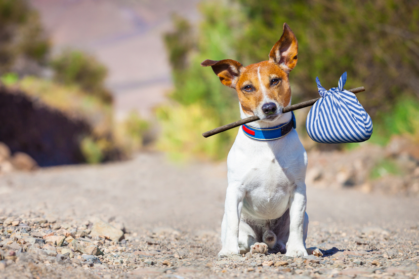 Osamoceny pes